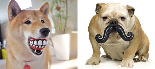 balles à dents chiens