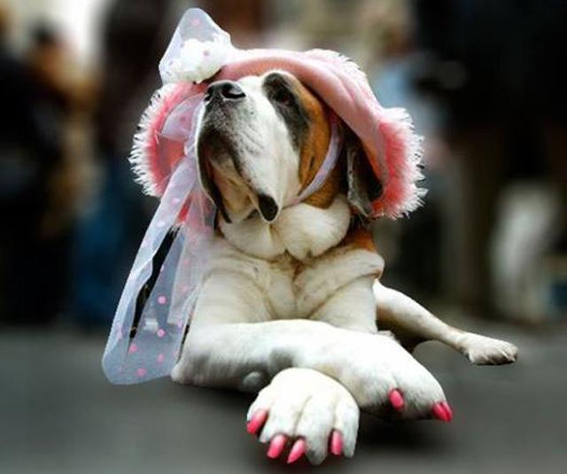 chien vernis à ongle