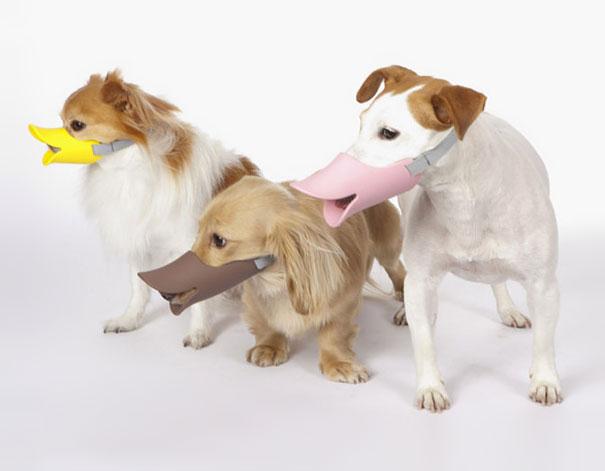 La muselière canard canin