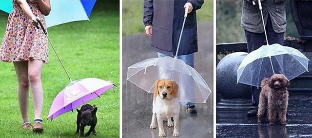 Parapluie laisse pour chien