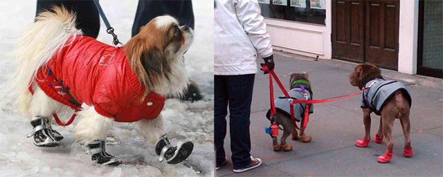 Chaussures tendances pour chien
