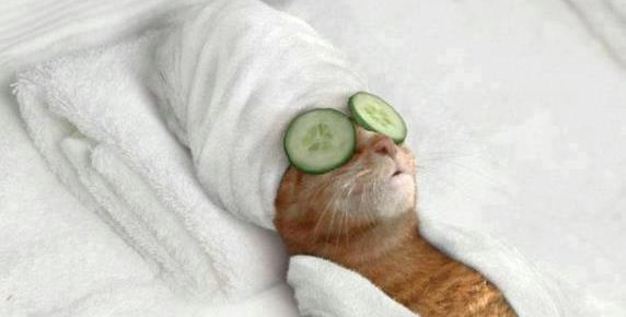 Chat en mode soin avec des concombres sur les yeux